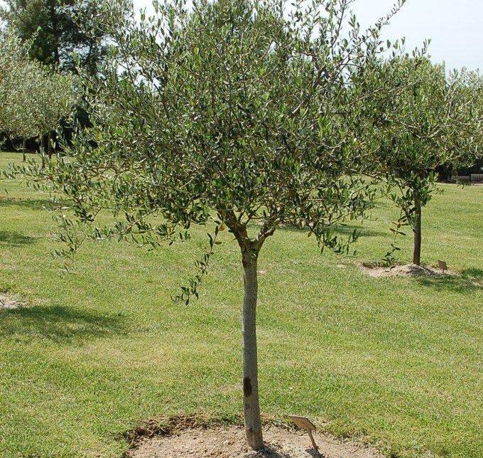 Aix-memorialisation-olivier