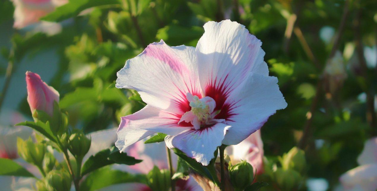 Hibiscus - Crématorium de la Martinique - La Société des Crématoriums de France