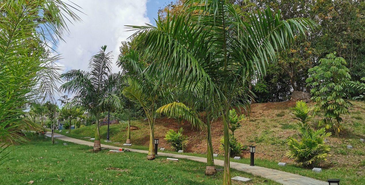 Palmier - Crématorium de la Martinique - La Société des Crématoriums de France